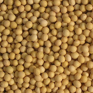 Latest Soybeans & Commodities Articles